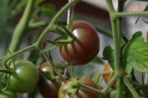 Przydomowy ogródek warzywny